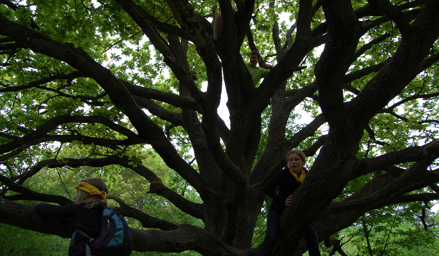 Pfadfinder wollen kranken Bäumen helfen